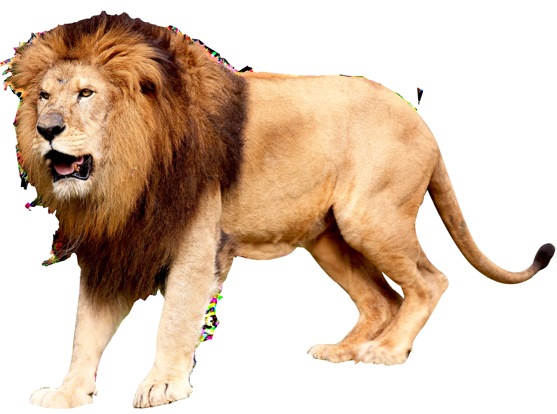 jpg royalty free download Png image purepng free. Transparent lion