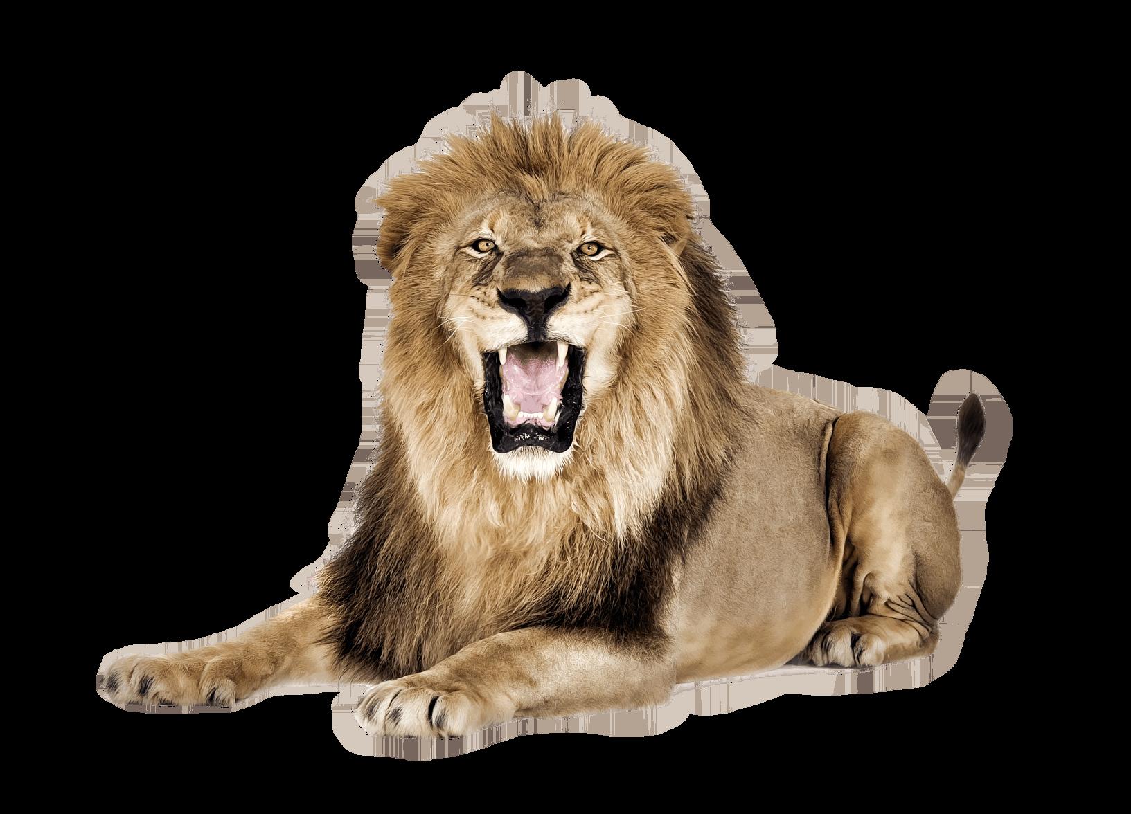 png free download Transparent lion. Roar png stickpng animals