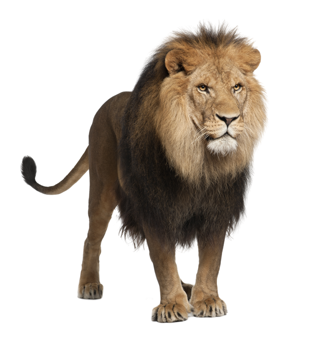 svg black and white stock Png images free download. Transparent lion background