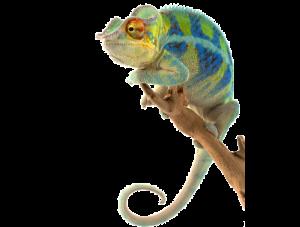 svg transparent stock Reptile Pets