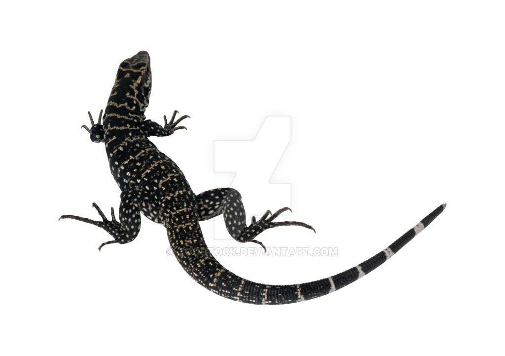 image free Lizard on a transparent background