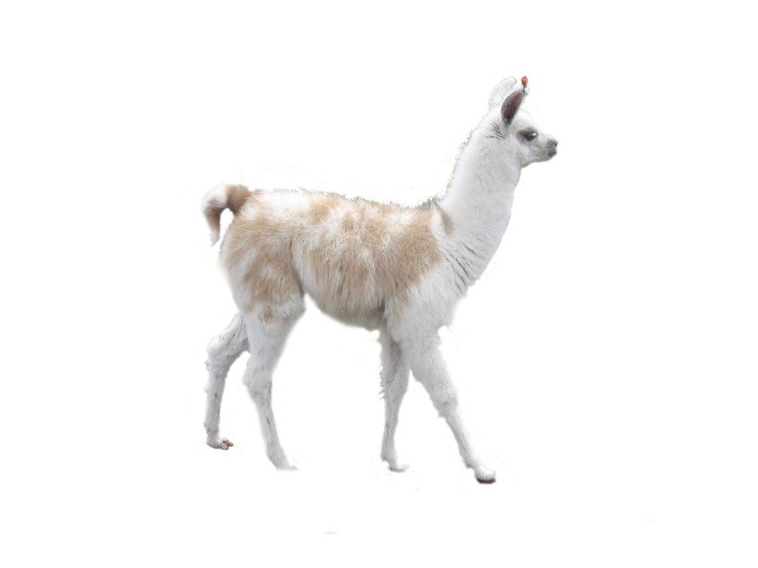 vector download alpaca vector vicuna #88876150