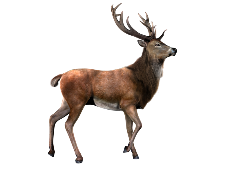 vector transparent Elk PNG by LG