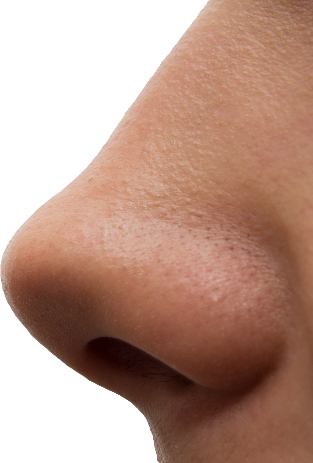 picture royalty free stock Transparent nose. Human png image purepng