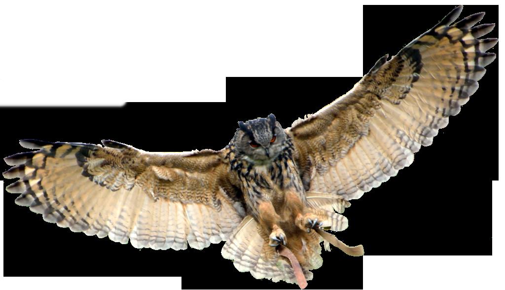image stock Transparent owl. Background png mart