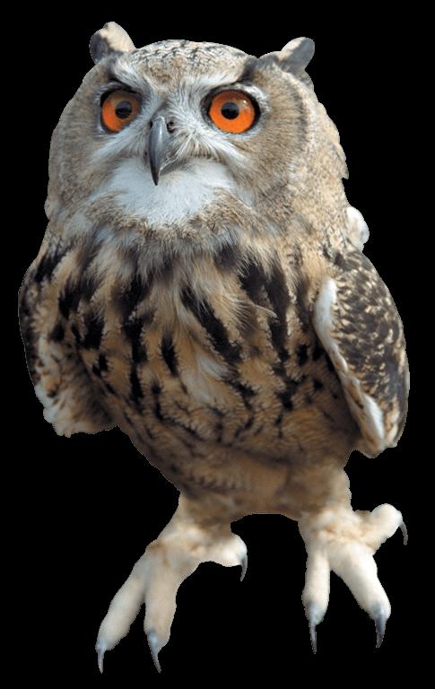 jpg free download Left png stickpng animals. Transparent owl