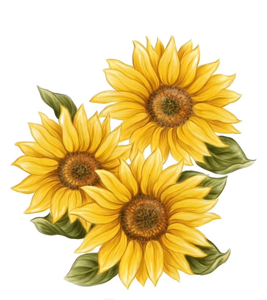 picture royalty free stock transparent sunflowers painted #117462973