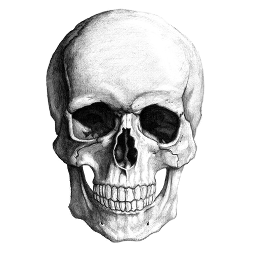 clipart freeuse library White transparent png stickpng. Drawing pic skull