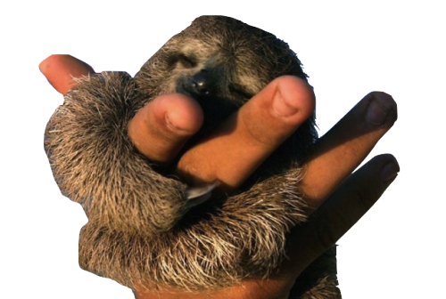 jpg transparent stock Transparent Sloths