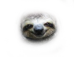 picture royalty free library Transparent Sloths
