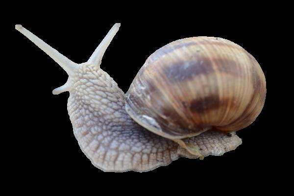 jpg transparent library transparent snail real #117380322