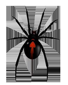 clip art transparent download Spider Control