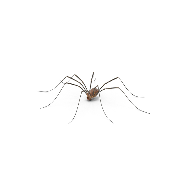 clip royalty free stock Daddy Long Legs PNG Images
