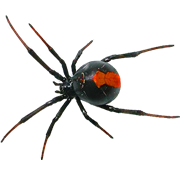 clipart library library Spider PNG Images On this site you can download free Spider PNG
