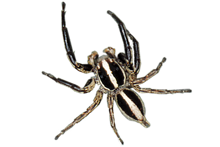 jpg transparent download Learn About Spiders