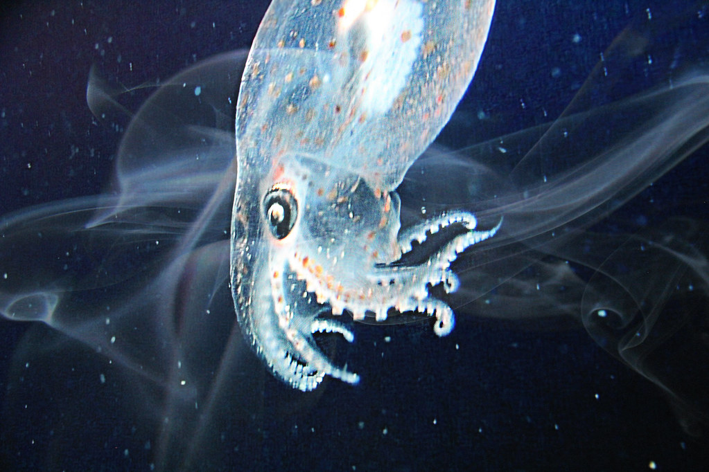 clipart royalty free library Transparent Squid