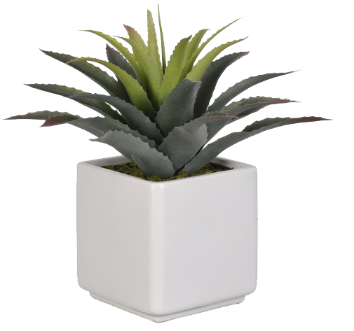 black and white stock Artificial Star Succulent Desk Top Plant in Pot