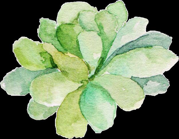 vector stock transparent succulent watercolor #117445732