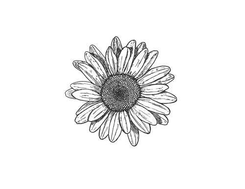 clipart free library Collection of free Daisy drawing artsy