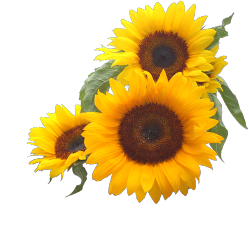 graphic royalty free library Corner sunflower png