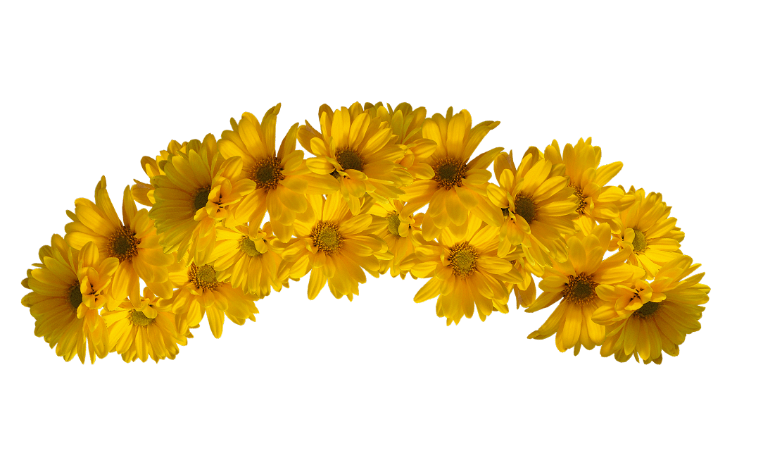 clip royalty free transparent sunflower flower crown #117458929