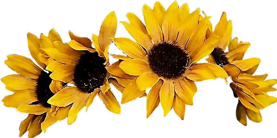 clipart download sunflower flowercrown coronadeflores flowers floresfall