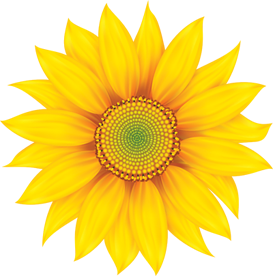 png library library transparent sunflowers frozen fever #117465101
