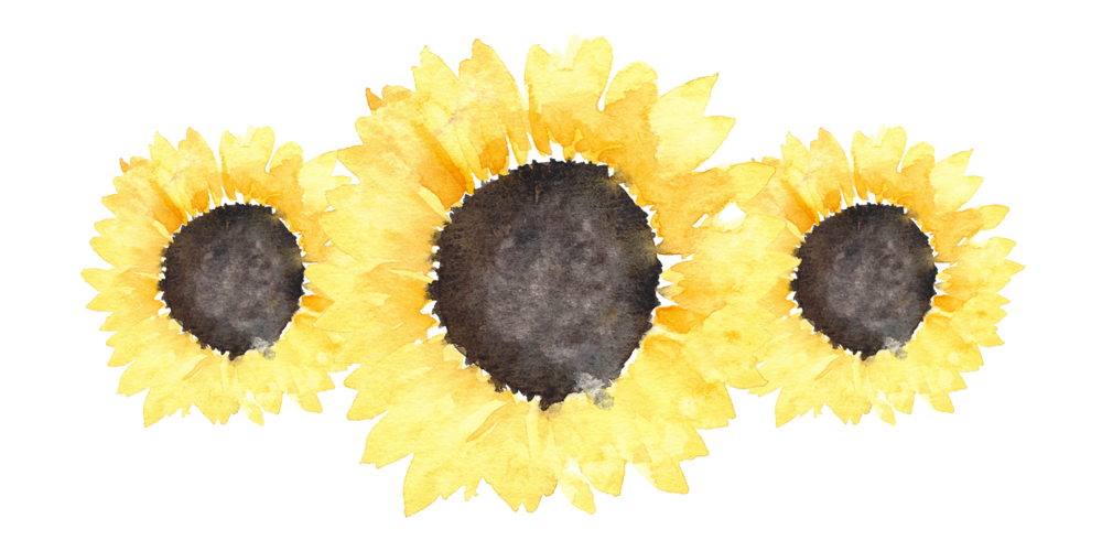 png freeuse download transparent sunflowers tumblr #117463994