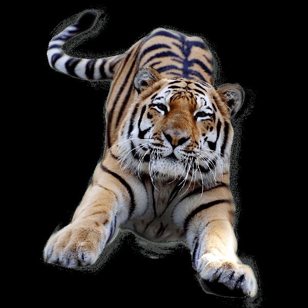 svg stock Jumping png stickpng. Transparent tiger