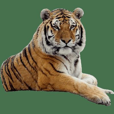 svg library stock Tigers png images stickpng. Transparent tiger
