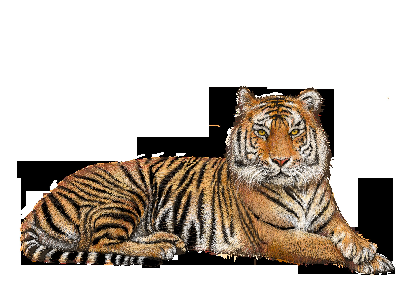 royalty free Download png images . Transparent tiger