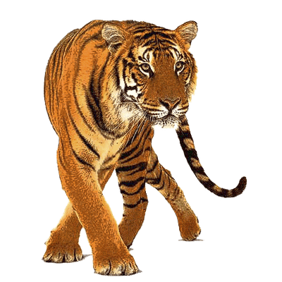 graphic royalty free stock Tigers png images stickpng. Transparent tiger