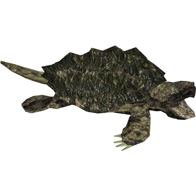graphic freeuse transparent turtle common #106891861