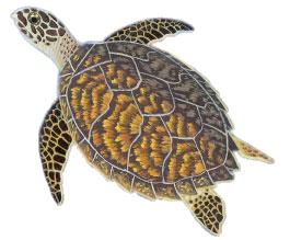 svg transparent turtle