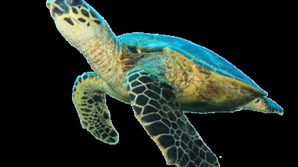 jpg library Sea Turtle Symbols