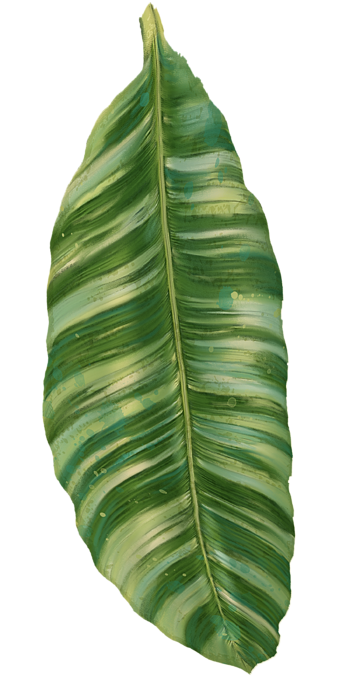 picture free download Image result for tropical leaves transparent png