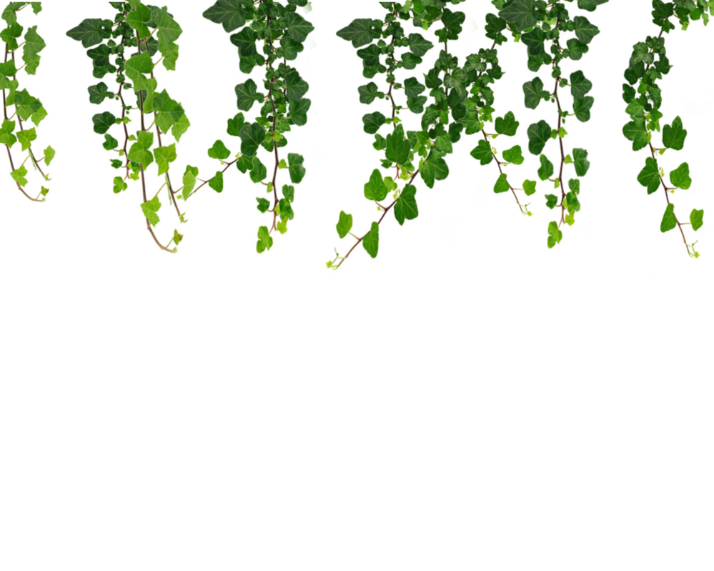 jpg transparent Hanging Vines Png by Moonglowlilly on deviantART