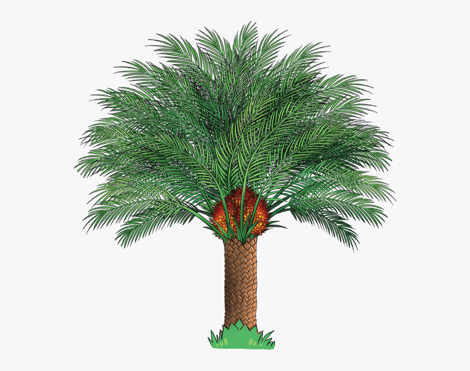 clip transparent Palm oil part of. Tree clipart.