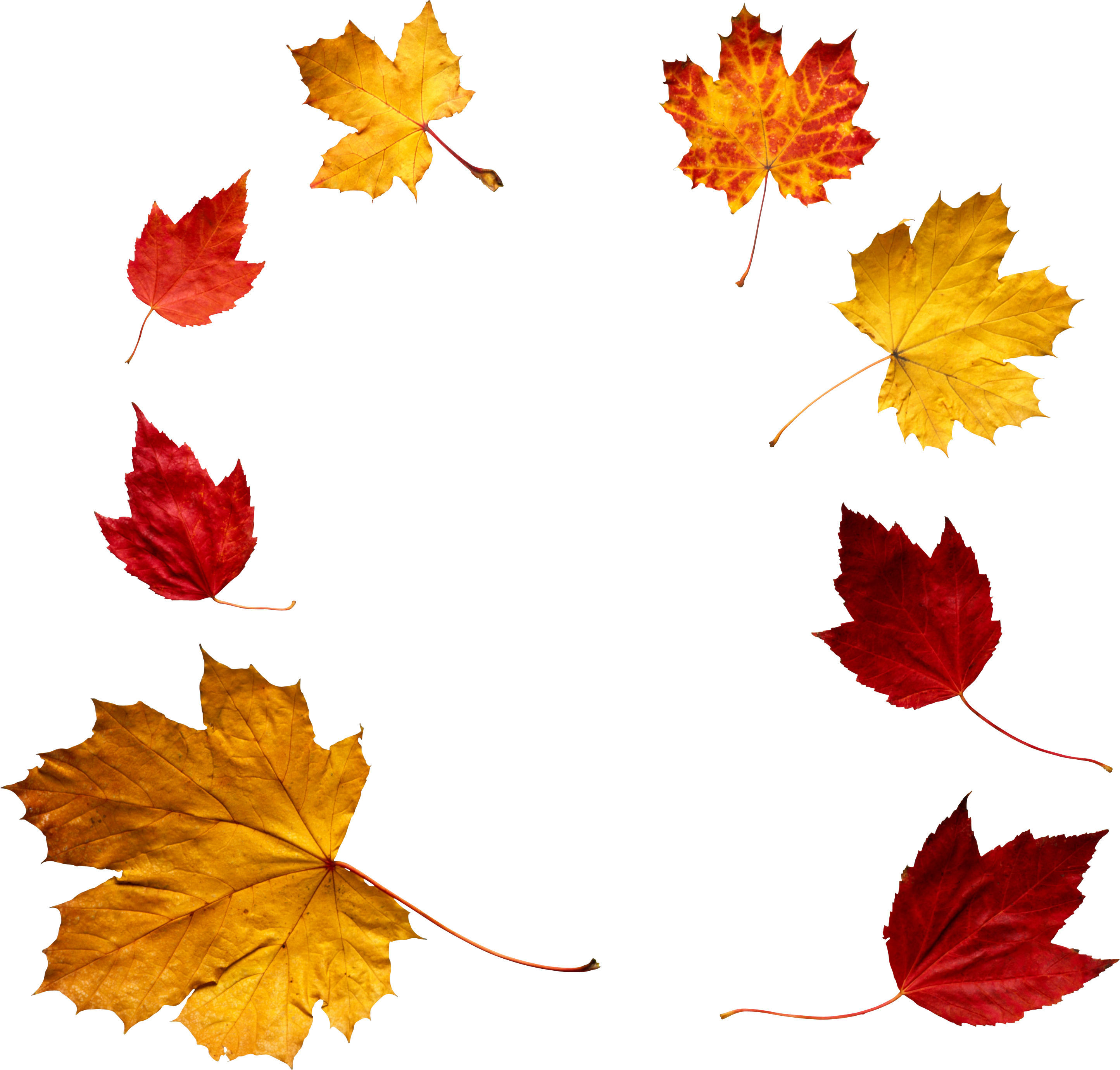 png freeuse stock Maple leaf november free. Autumn leaves clipart transparent background
