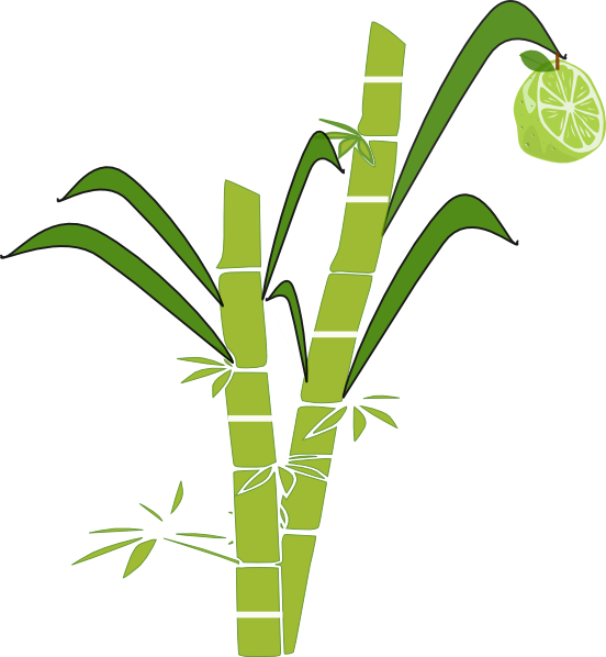 jpg transparent stock Sugarcane drawing.  collection of sugar