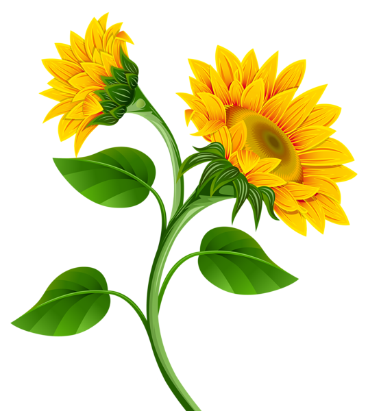 jpg free download Tree pencil and in. Trees clipart sunflower