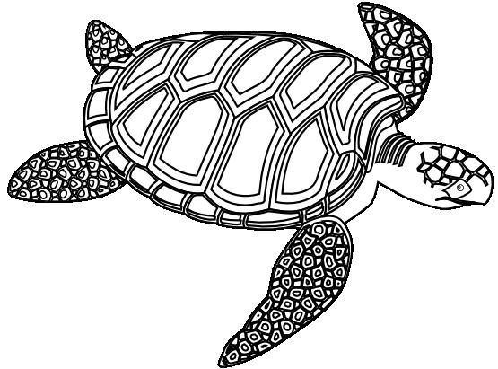 clip art freeuse stock Sea Turtle Tattoo Black And