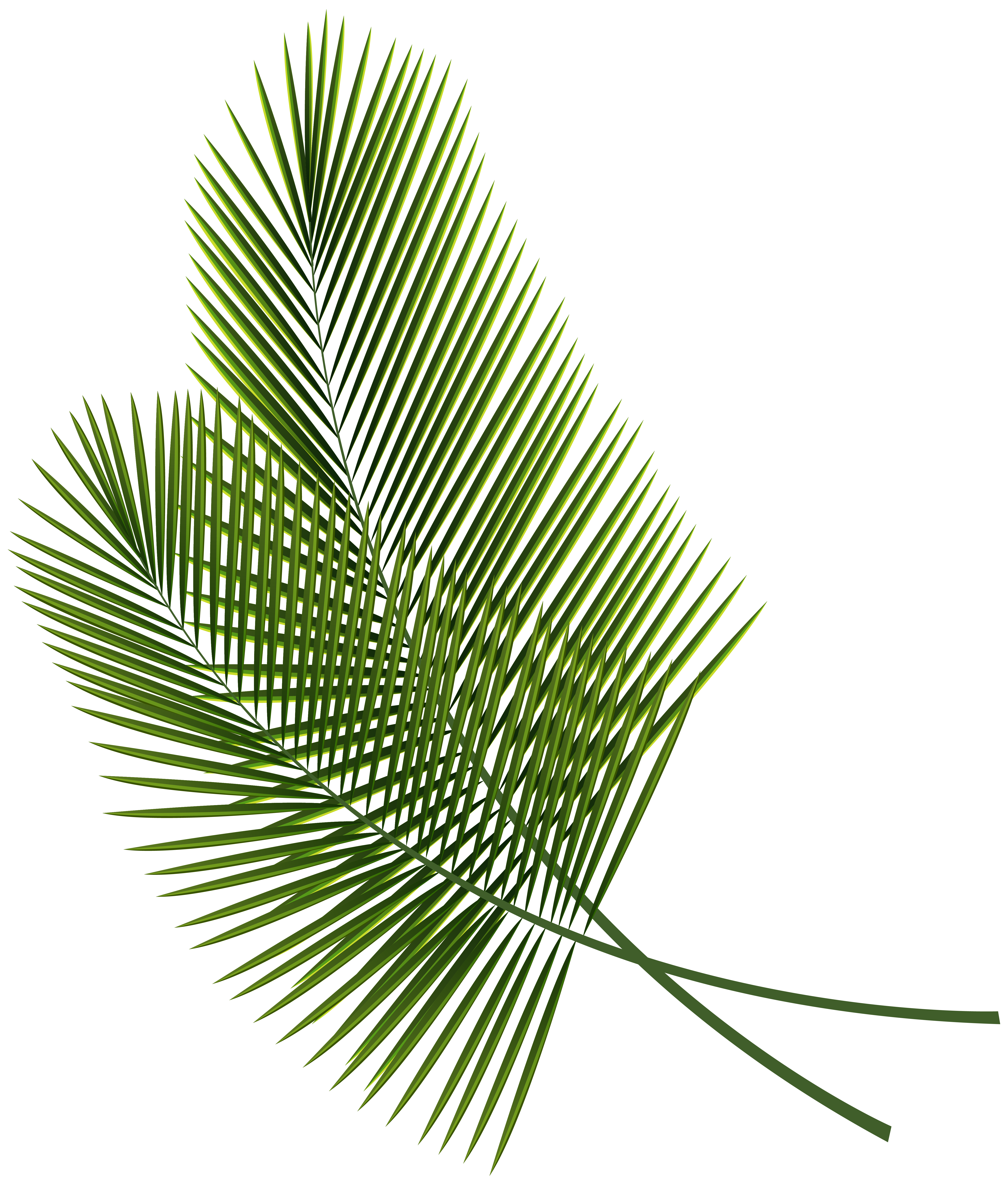 clipart royalty free download Leaves png image gallery. Tropical clipart