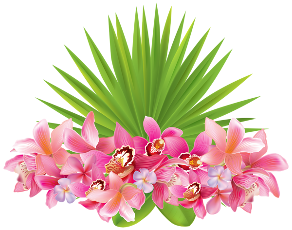 vector library download Tropical Flowers PNG Clipart Image