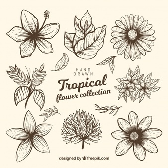 graphic black and white Drawings at paintingvalley com. Tropical drawing exotic flower