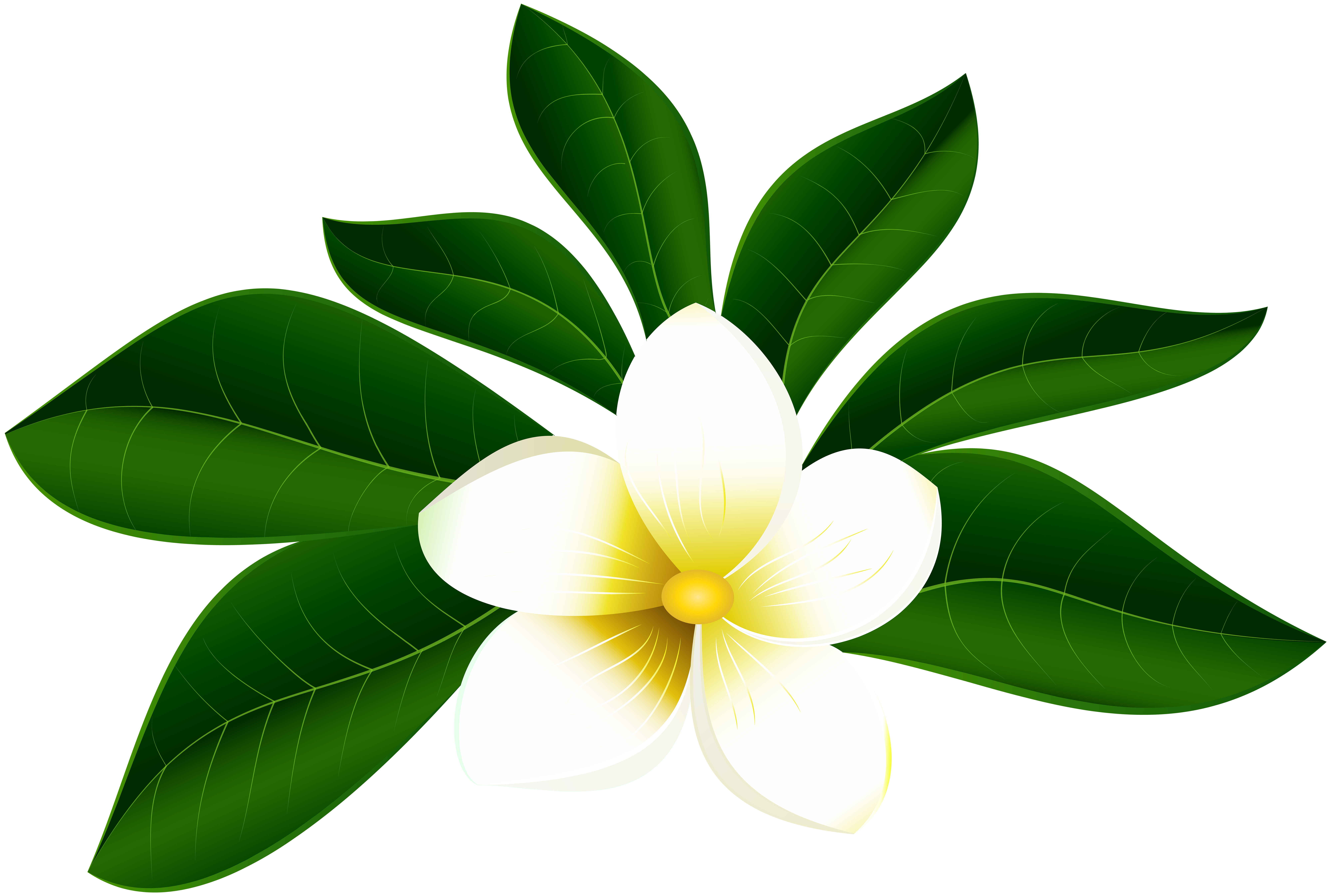image freeuse download Clipart at getdrawings com. Tropical drawing exotic flower