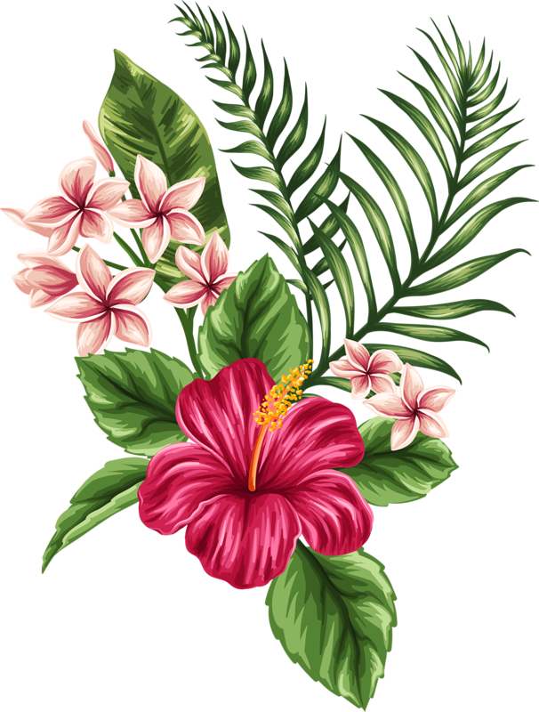 clipart library library  a cb beba. Tropical drawing