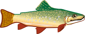 black and white library Trout clipart rainbow trout. Clip art at clker