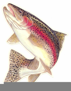 banner library stock Free images at clker. Trout clipart rainbow trout