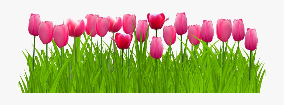 jpg free stock Flower free png transparent. Tulip border clipart